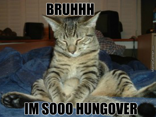 hangover cat possibly a new meme by caromamma meme