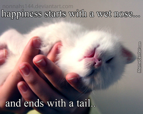 Happiness Is Being Owned By A Cat :3