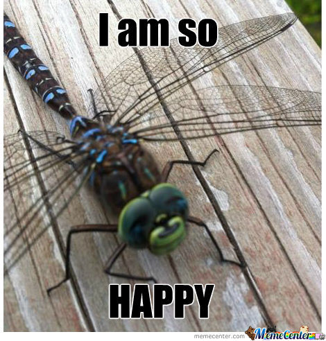 Happy Dragonfly Is Happy