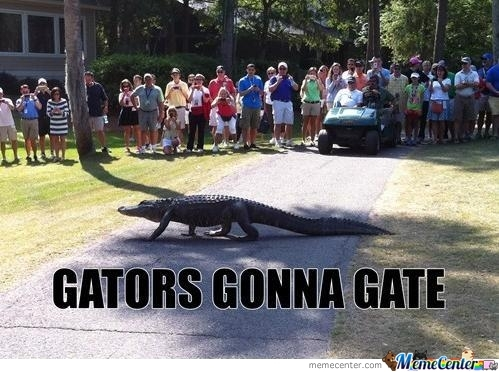Haters,,, Gators