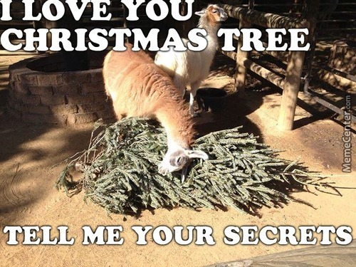 He's Pining Over That Tree