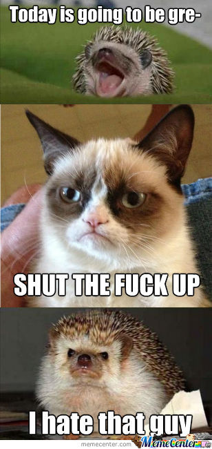 Hedgehog Does Not Approve Of Grumpy Cat
