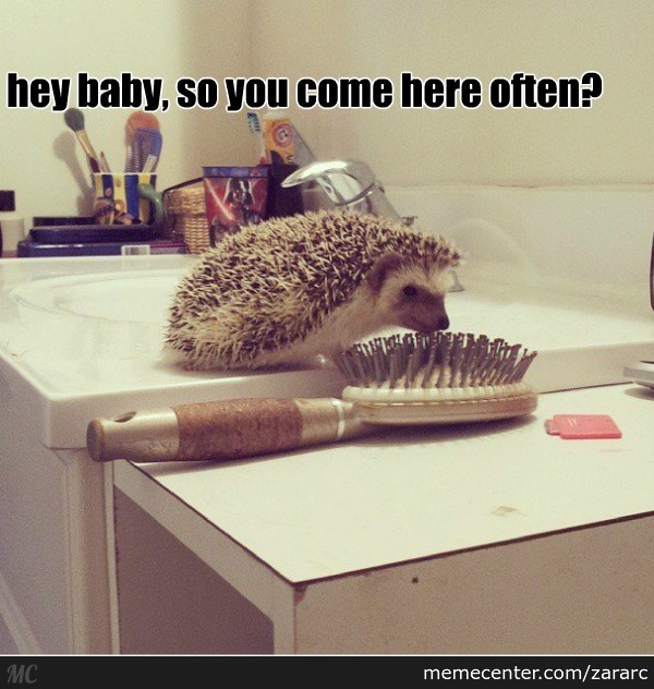 Hedgehog Found A New Date :3