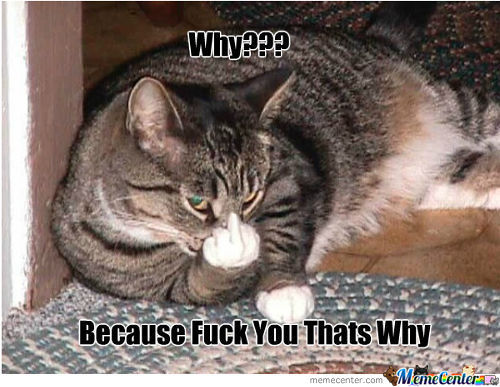Hehe Cats Are Funny