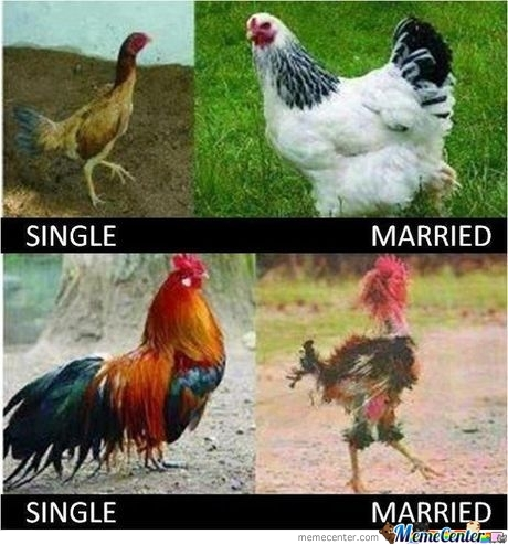 Hen And Rooster - After Marriage