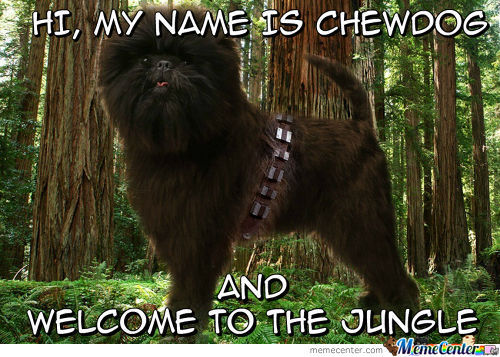 Hi My Name Is Chewdog