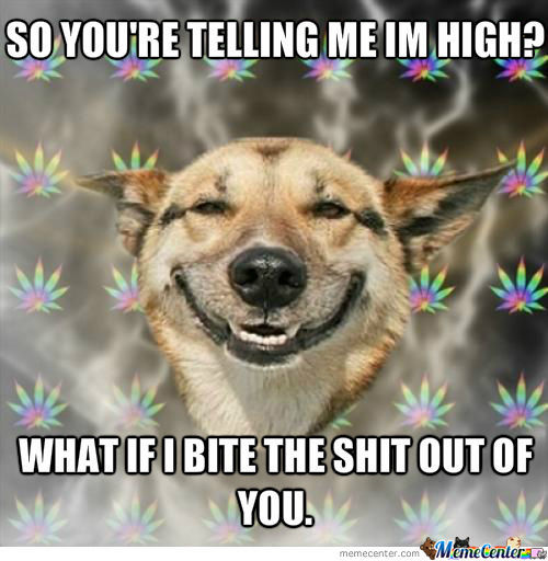 High Dog Being High To Owner.