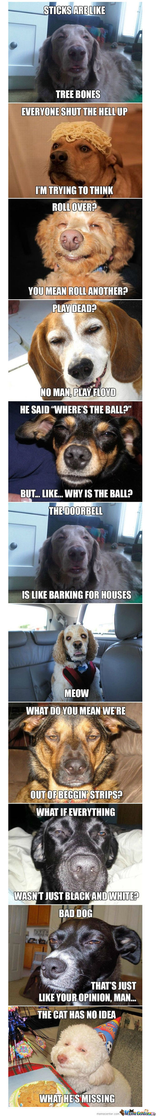 High Dogs