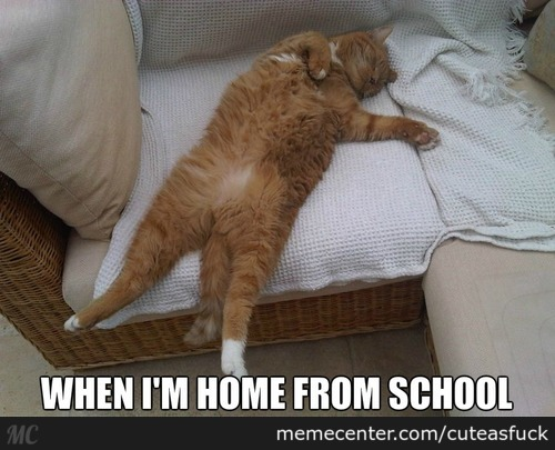 Funny School Meme Pictures : Home school memes best collection of funny home school pictures