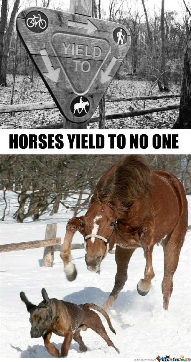 Horses Yield To No One!