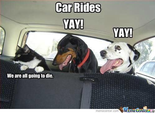 How Animals See Car Rides