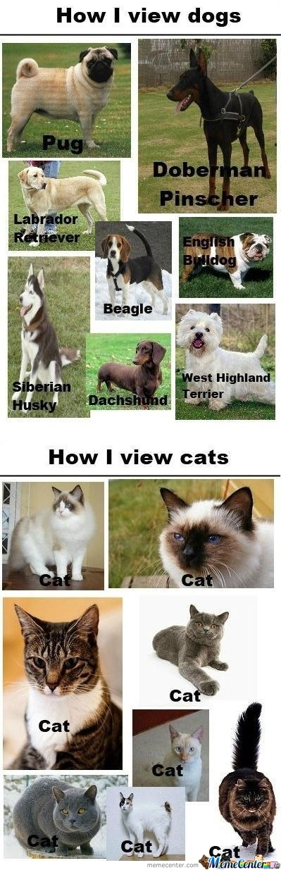 How I See Dogs...to Cats (Origional)