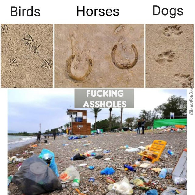 How To Recognize An Animal According To It'S Footprints