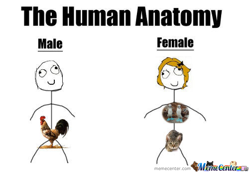Human Anatomy Memes Best Collection Of Funny Human Anatomy Pictures