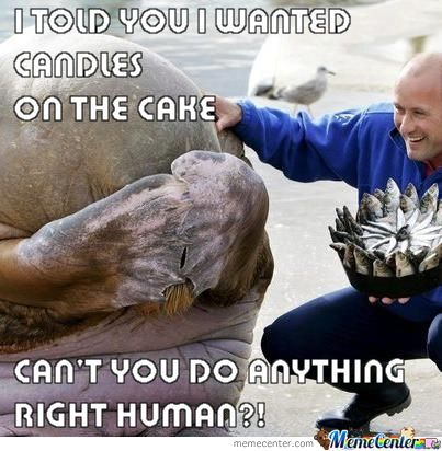 Humans Ruining Animals Birthdays Since 1969