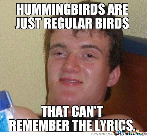 Hummingbirds Cant Sing