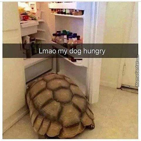 Hungry Shell Doggo