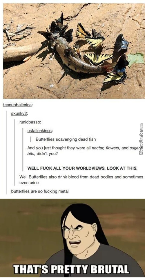 I Am Scared Of Butterflies Now
