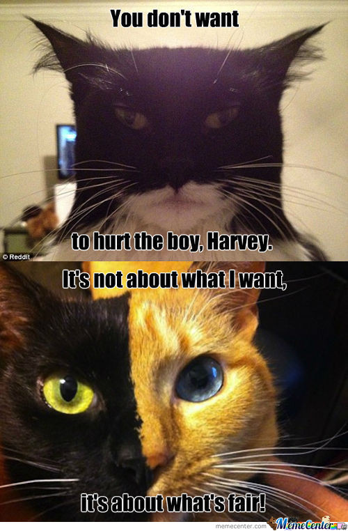 I Am The Cat That Gotham Deserves.