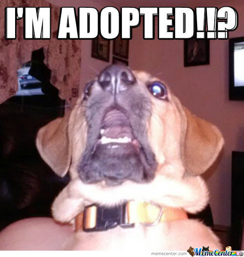 I'm Adopted.... Wait What???