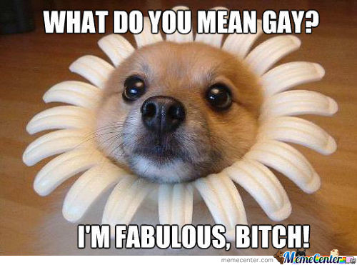 I'm Fabulous Bitch... Fabulous!