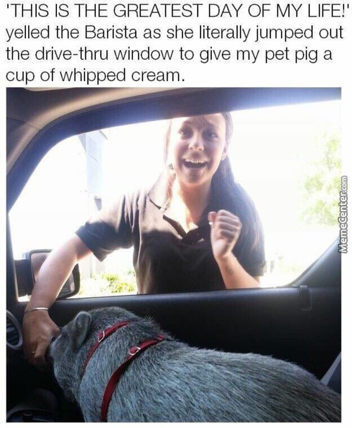 I've Been Told Pigs Make Great Pets
