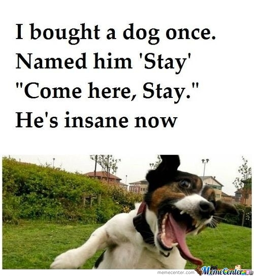 I Bought A Dog Once..