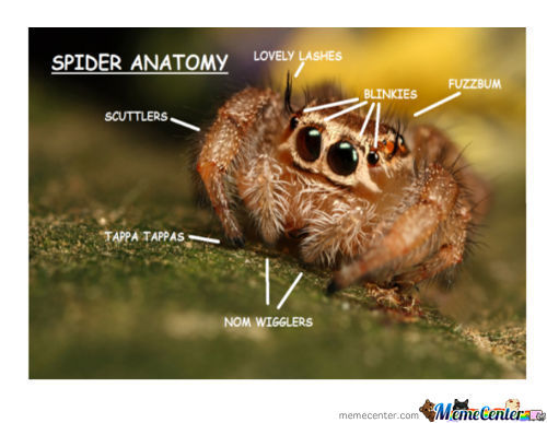I Can't Be The Only One Who Likes Spiders Here....can I?