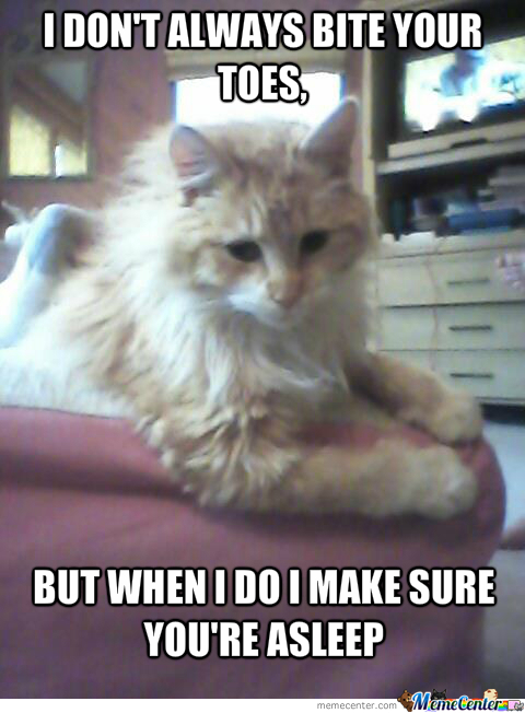 I Don't Always Cat