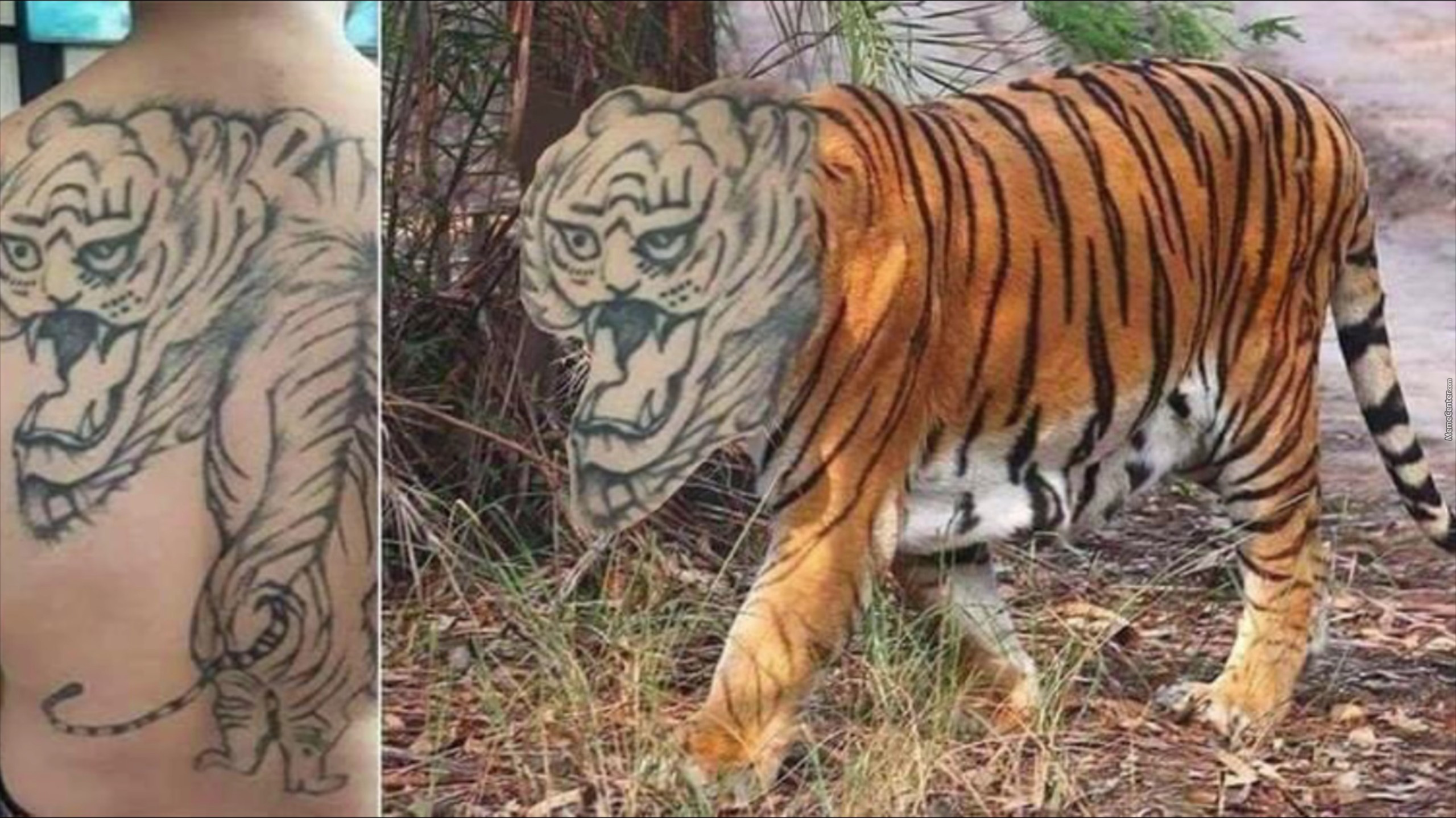 I Dont Want That Tiger,how About You?