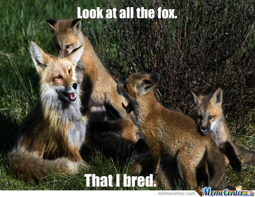 Look at all the fox