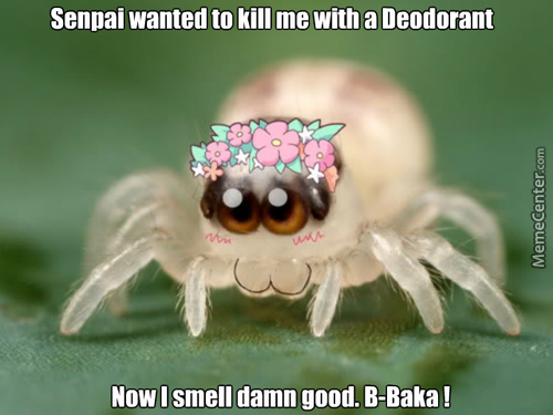I Know That Spider Is Small. But I Have Arachnophobia. And A Kawaii Spider Is More Scarier.