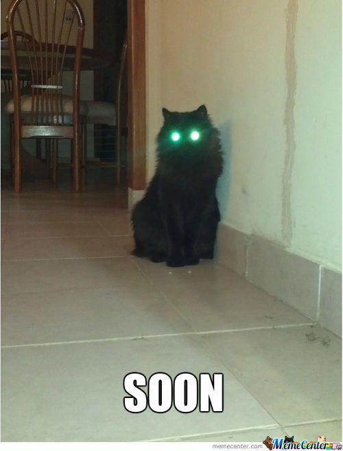 I Need An Exorcist For My Cat...
