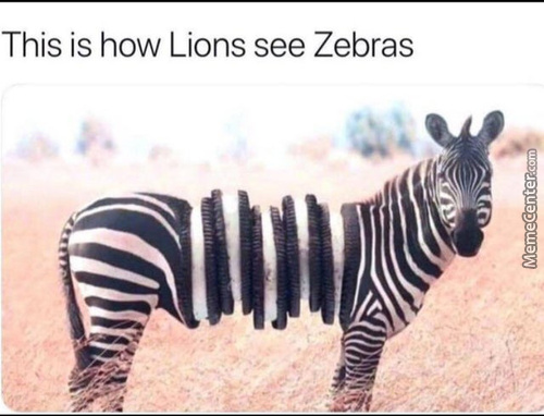 I Seriously Doubt That Every Single Zebra Is Different There's Gotta Be At Least 2 Zebras That Look The Same