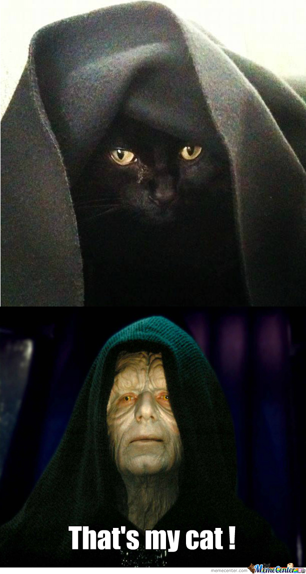 I Think My Cat Is A Sith...