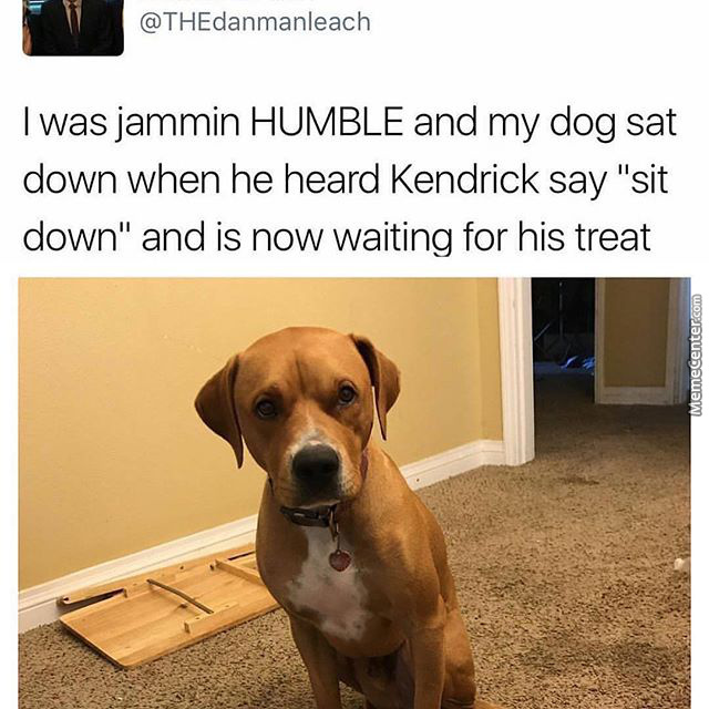 """I Was Jammin Humble And My Dog Sat Down When He Heard Kendric Say """"sit Down"""" And Is Now Waiting For His Treat"""
