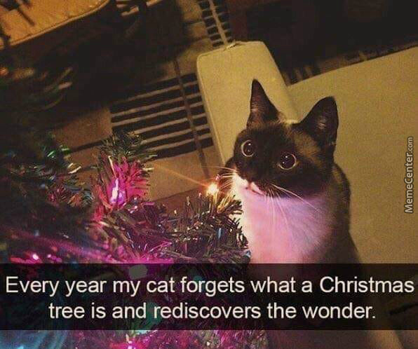 I Wish Veronica Would Look At Me The Way This Cat Looks At A Christmas Tree