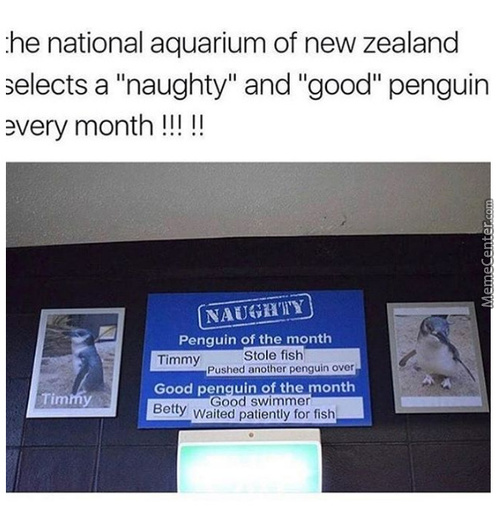 I Would Give Timmy Another Fish To Push Another Penguin Again Tbh