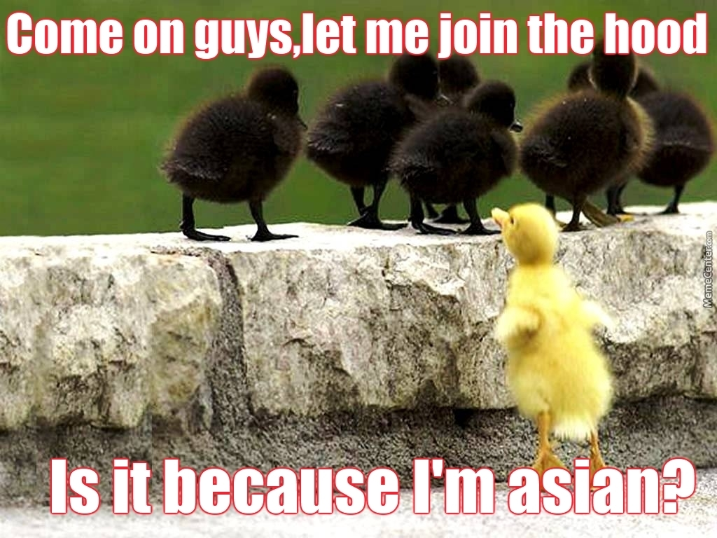If The Ugly Duckling Has Taught Us Anything It S That Ducks