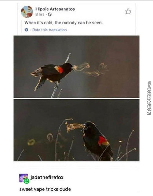 If You Do Get Reborn As An Animal, I Want To Be This Bird