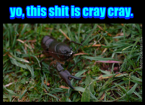 If You Squint It's Just Coyote Poop, But It Was Actually A 1-Armed Crayfish In The Middle Of The Woods... Makes Sense.