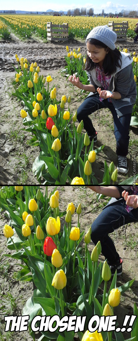 """In A World Where Tulips Were Yellow, One Dared To Be Different…"""