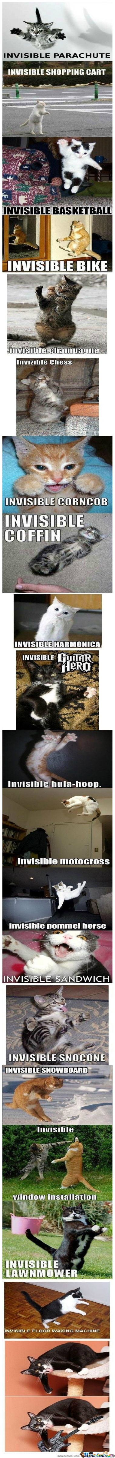 Invisibility Lvl :cat