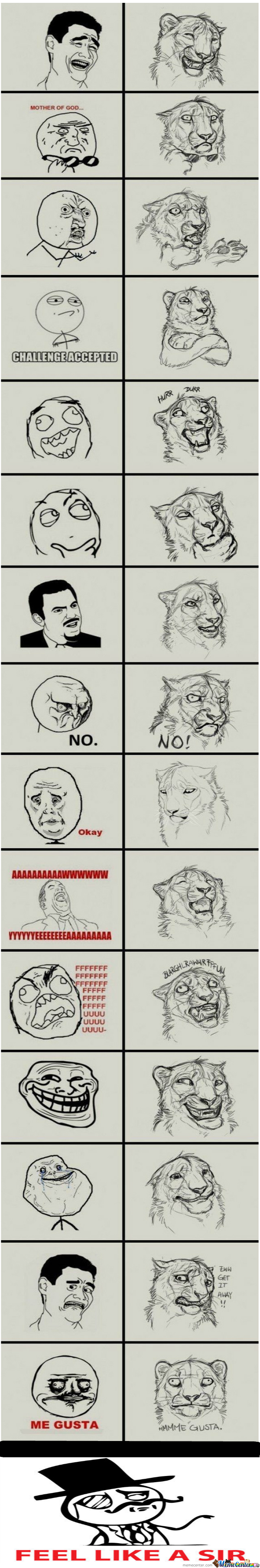 Is It A Lion Or A Tiger?