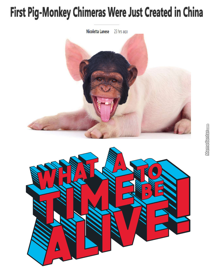 Is It A Pig With No Soul Or Just Monkeying Around?