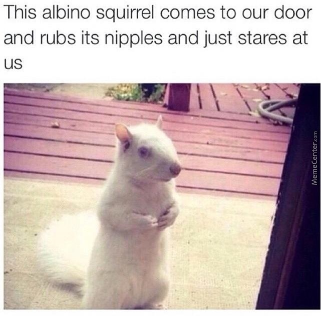 Is This What Squirrels Do As Sexual Harrasment