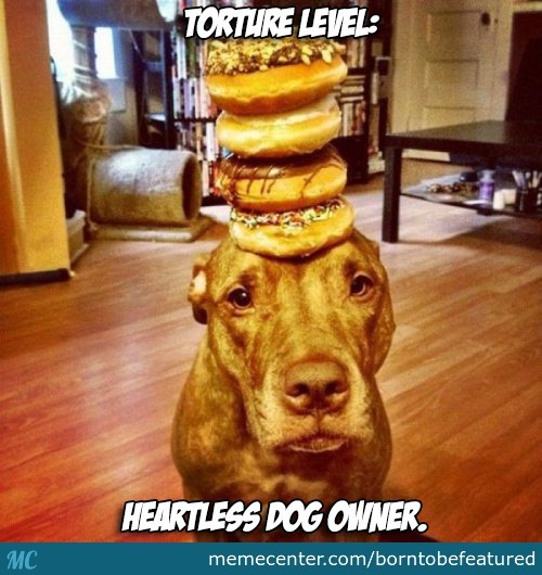 Isn T Chocolate Toxic For Dogs By Borntobefeatured Meme Center
