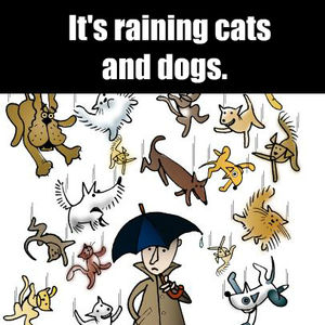 Que Veux Dire Raining Dogs And Cats