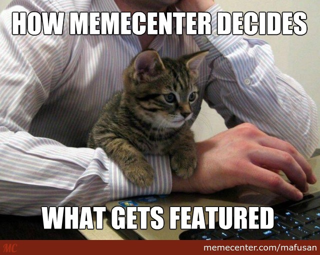 It's The Purrfect Selection Process