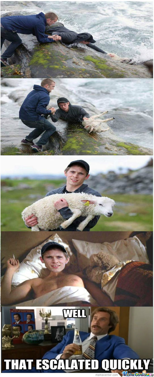 It Was The Least The Sheep Could Do